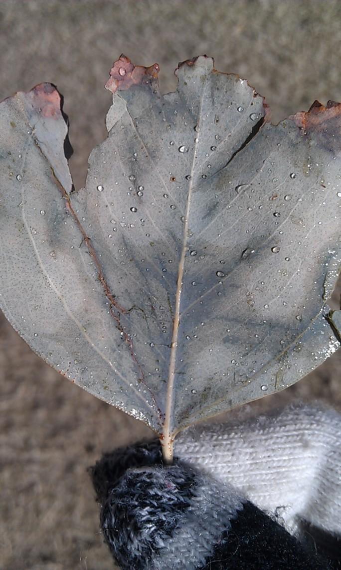 new year leaf