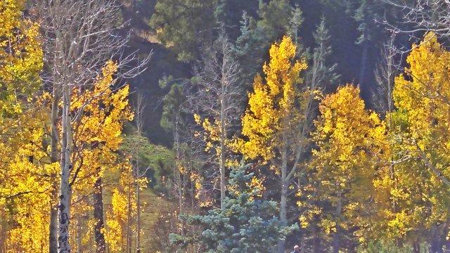 Fall leaves on Mt. Lemon.