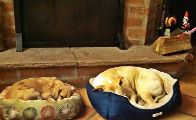 Sleeping pups and a cleverly hidden elf.