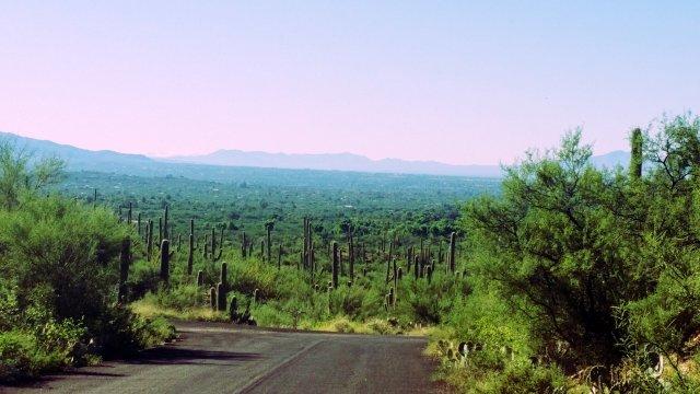 sabino road