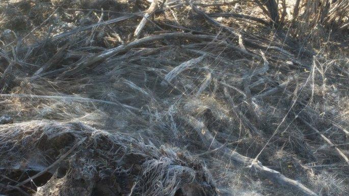 sabino canyon spider web