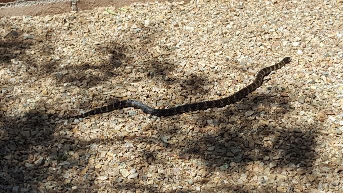 Sweet, little King snake.